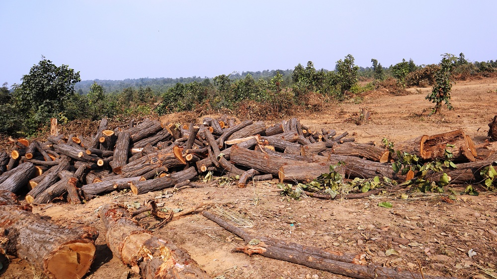 Forest being cleared for mining in Talabiria, Sambalpur